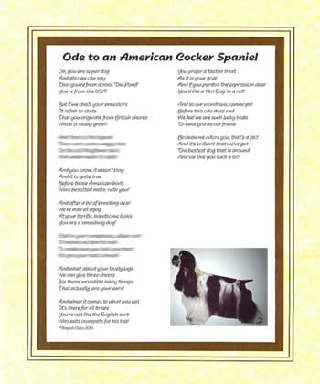 Ode to an American Cocker Spaniel