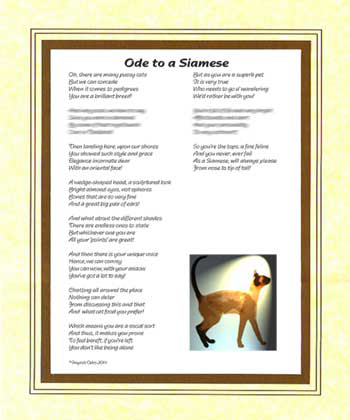 Ode to a Siamese Cat