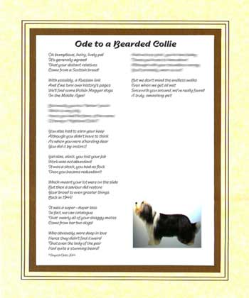Ode to a Bearded Collie